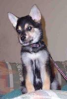 Beacan Barkley at 10 weeks